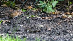 Garten im Innenhof Maus